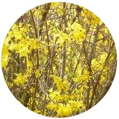 Gelber Kreis