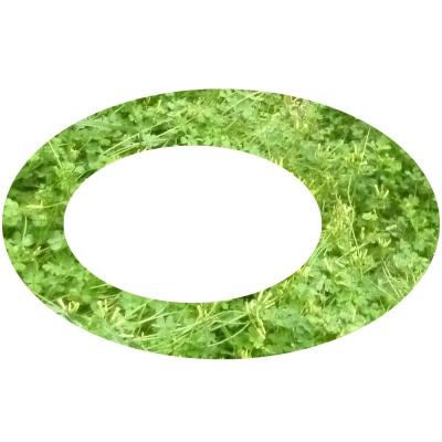 Grüner Kringel 2