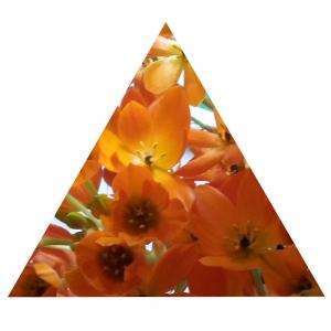 Rotes Dreieck, gleichseitig