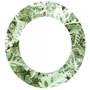 Grüner Kringel 1