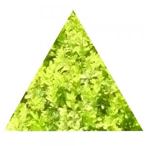 Grünes Dreieck, gleichseitig