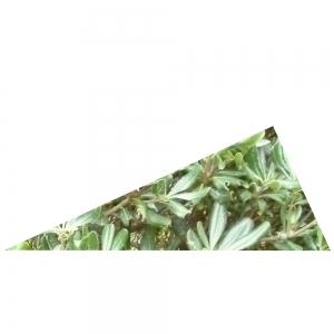 Rechtwinkliges Grünes Dreieck 2