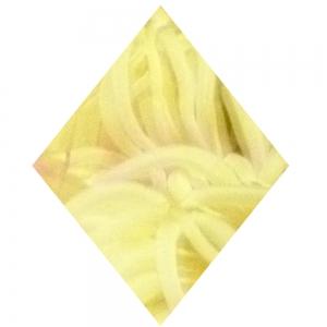 Gelbe Raute, hochkant