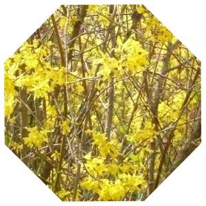 Gelbes Achteck