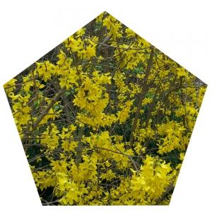 Gelbes Fünfeck