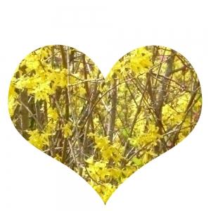 Herz, gelb