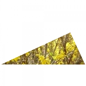 Rechtwinkliges Gelbes Dreieck 1