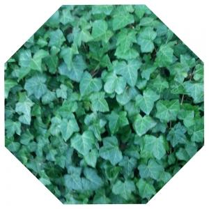 Grünes Achteck