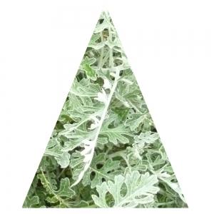 Grünes Dreieck, hoch