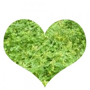 Herz, grün