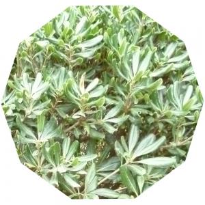 Grünes Zehneck