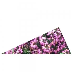 Rechtwinkliges Rotes Dreieck 2