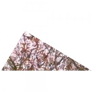 Rechtwinkliges Rotes Dreieck 1